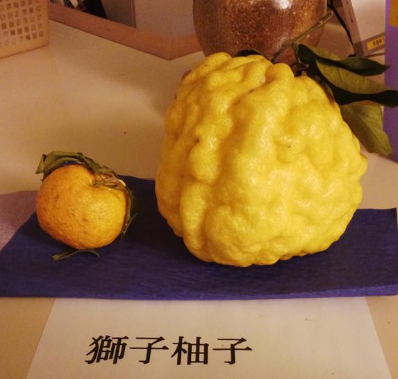 20131222獅子柚子.png