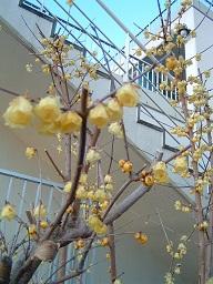 20140204立春 ②.jpg