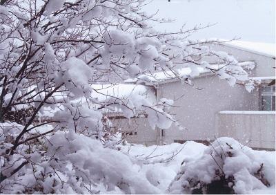 20140214大雪②.jpg