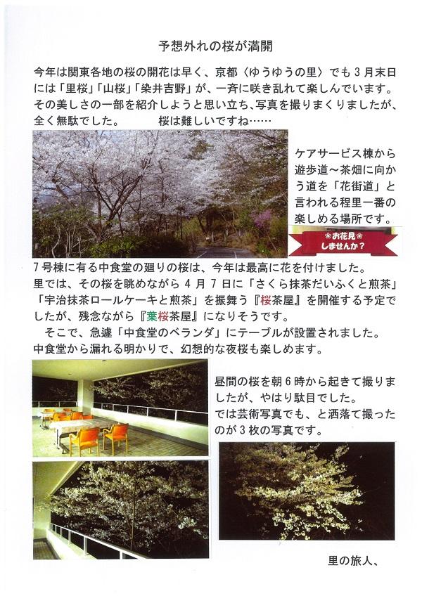 20180303桜.jpg