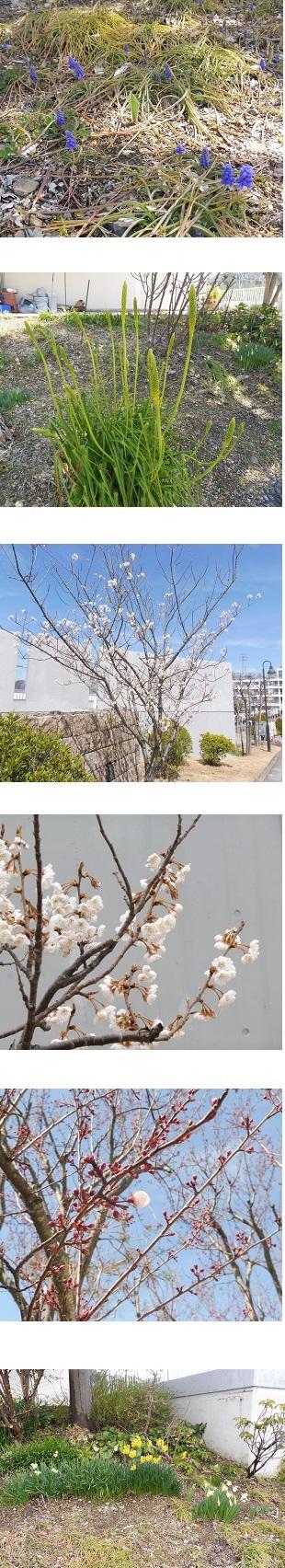 20190318外山氏②.jpg