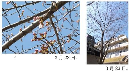 20200331春が来た③.jpg