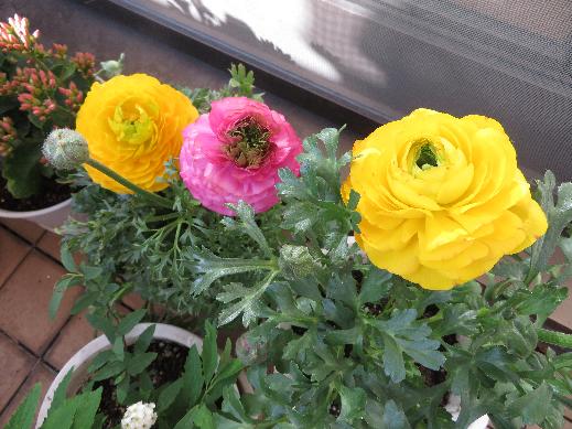 お花02.png