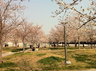 さくら公園①.JPG