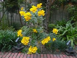 テラスの花々2.JPG
