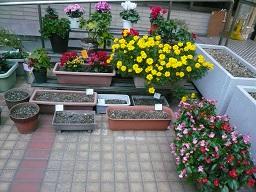 テラスの花々.JPG