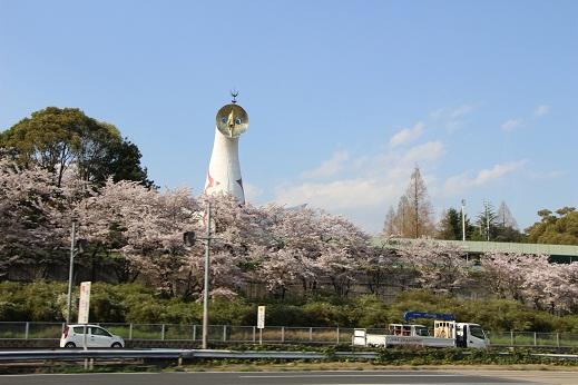 万博公園桜2017.JPG
