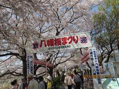 八幡桜まつり.JPG