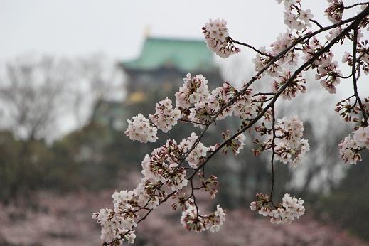 大阪城桜.JPG