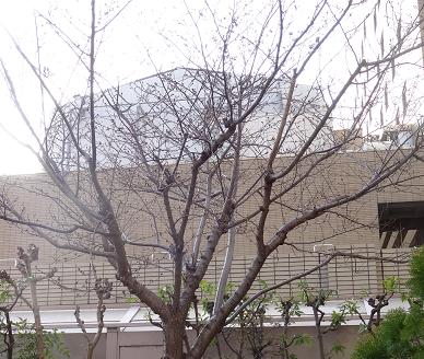 桜②.png