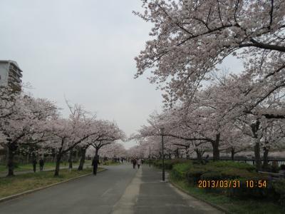 毛馬桜之宮公園.jpg
