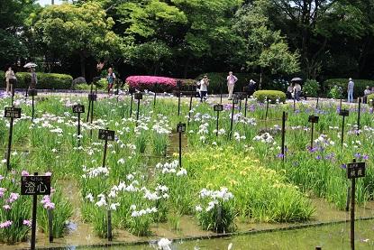 菖蒲園3.jpg
