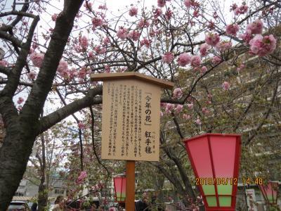 造幣局桜の通り抜け3.jpg