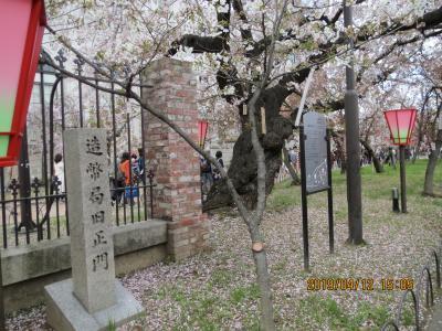 造幣局桜の通り抜け7.jpg