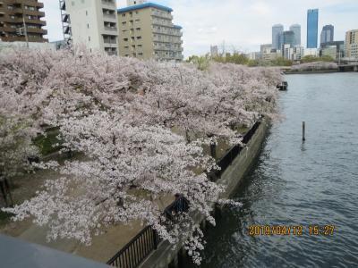 造幣局桜の通り抜け8.jpg
