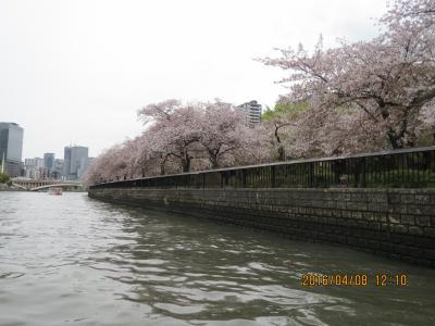 造幣局通り抜け6.jpg