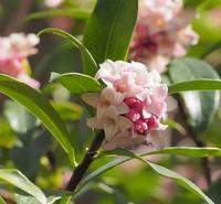 三月の花々1.jpgのサムネール画像