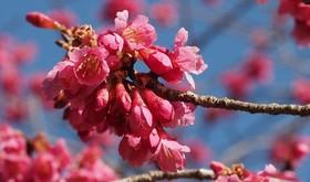 3月始の花々13.jpg