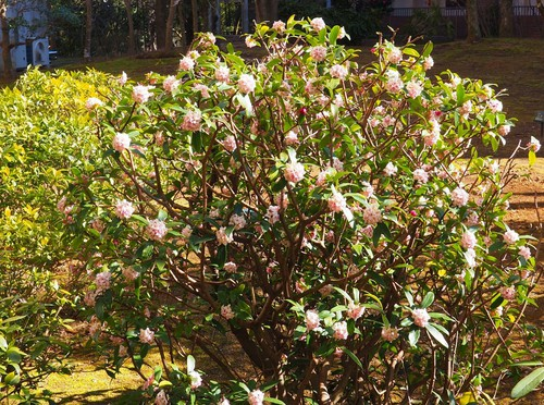三月の花々2.jpg