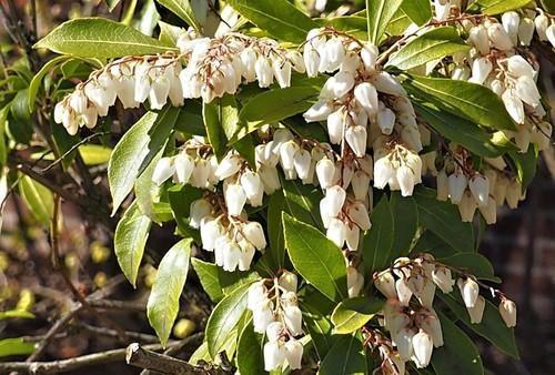 三月の花々3.jpg