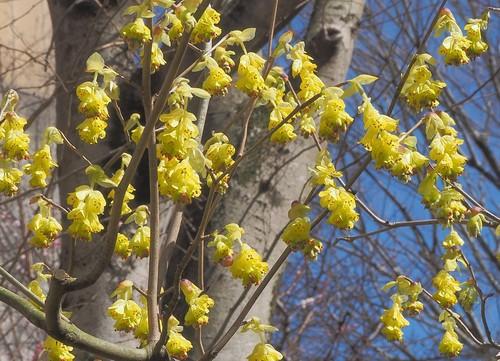 三月の花々4.jpg