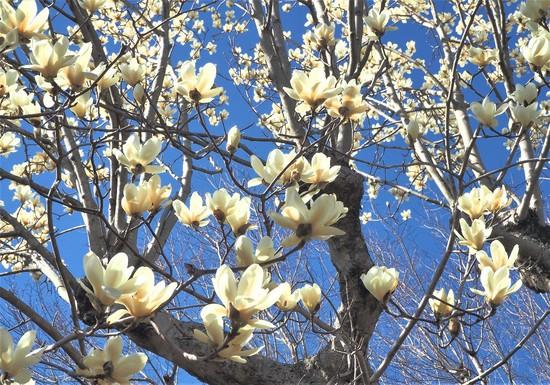 三月の花々8.jpg