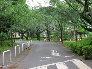 今日の桜通り.jpg