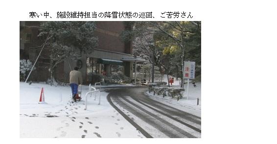 佐倉も雪03.jpg