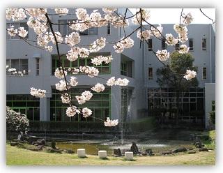 桜と噴水.jpg