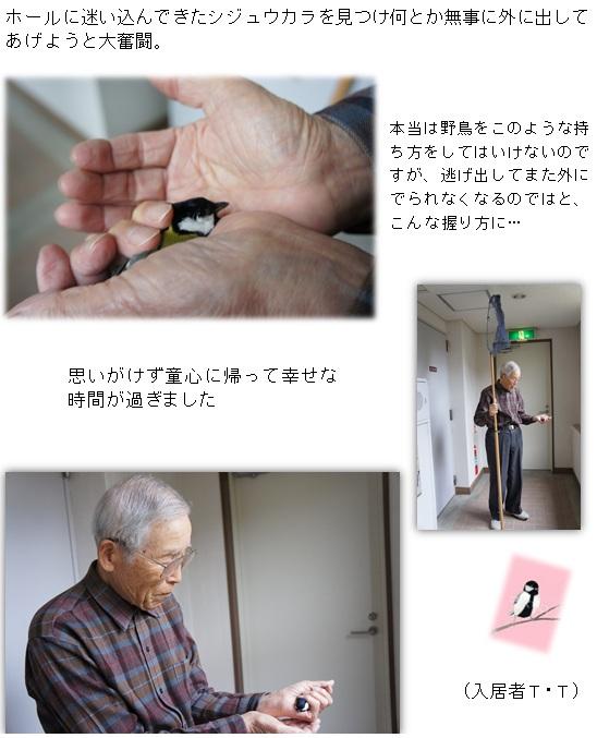 無題シジュウカラ.jpg