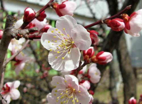花びら2.jpg