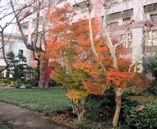 12月の紅葉3.jpg
