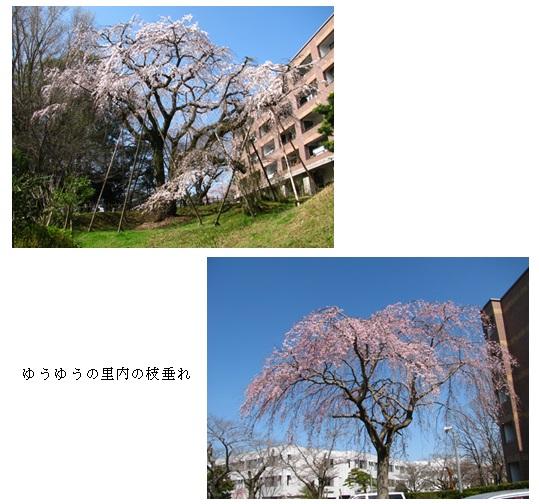 20130324_5.jpg