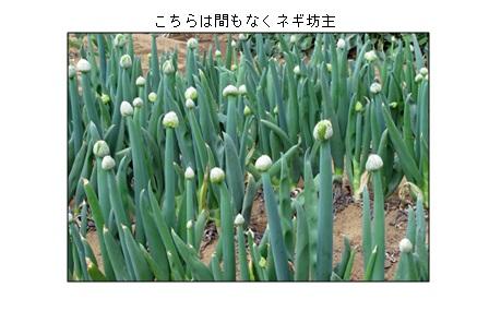 20130414_2.jpg