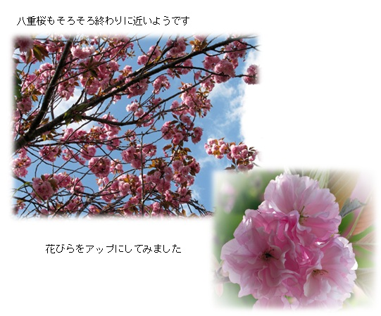 20130414_3.jpg