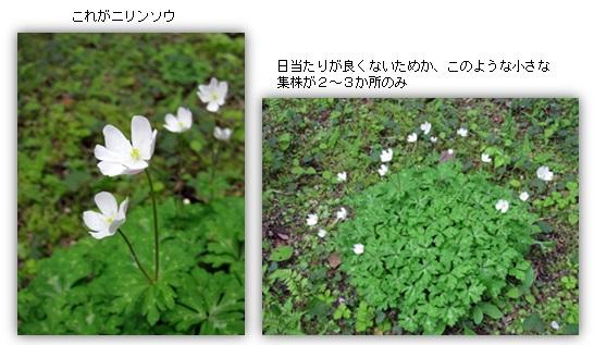 20130425_4.jpg
