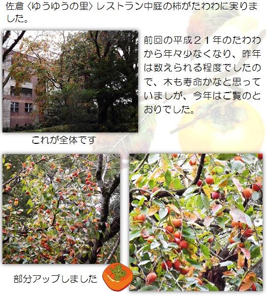 20151029_1.jpg