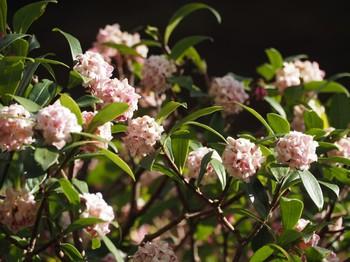 3月始の花々1.jpg