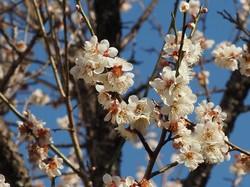 3月始の花々10.jpg