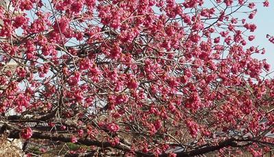 3月始の花々12.jpg