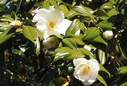3月始の花々15.jpg