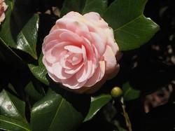 3月始の花々5.jpg