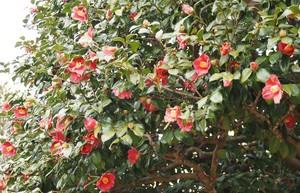 3月始の花々7.jpg