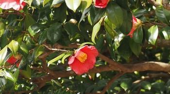 3月始の花々8.jpg