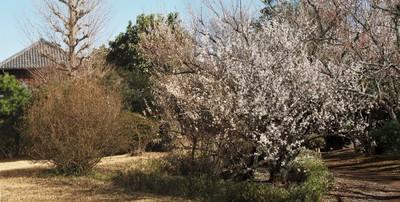 3月始の花々9.jpg