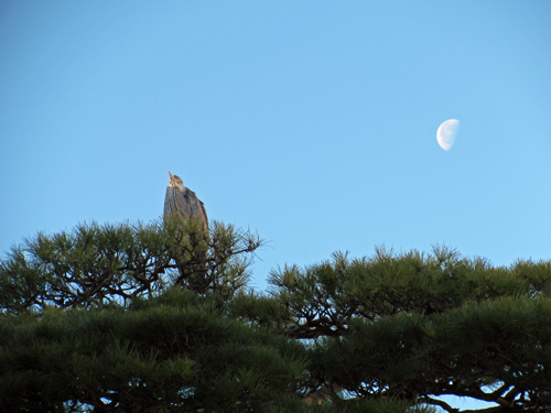 IMG月と鷺500p.jpg