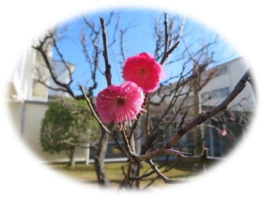 ピンク花.jpg