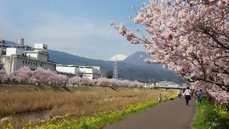 富士フイルム工場.jpg