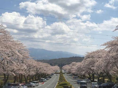 桜並木20190419_2.jpg