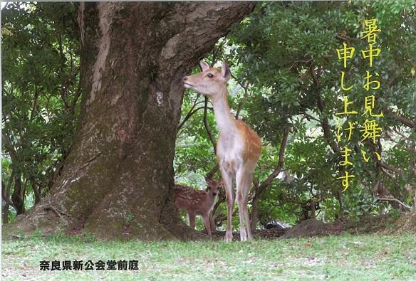 scan20140805鹿.jpg